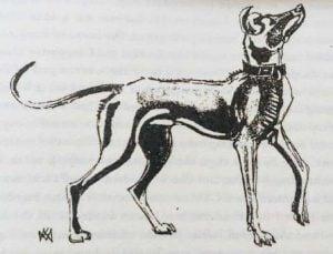 1940 Sketch of Rajapalayam dog