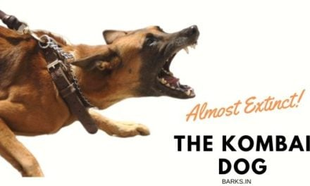 Kombai dog. Pictures, traits, and more