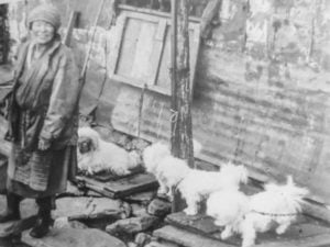 1930 image of Lhasa Apso pups for sale in Tibet