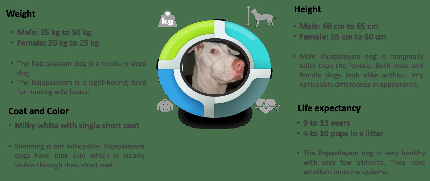 Rajapalayam breed traits infographics