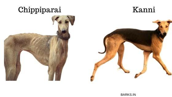 Chippiparai versus Kanni