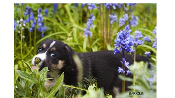 Dog playing in bushes