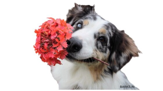 Dog with flowers in its mouth