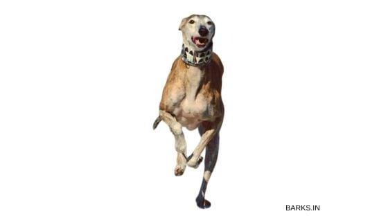 Kanni running fast