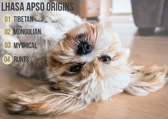 Lhasa Apsos different origins