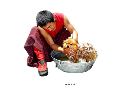 Tibetan man bathing his Lhasa Apso