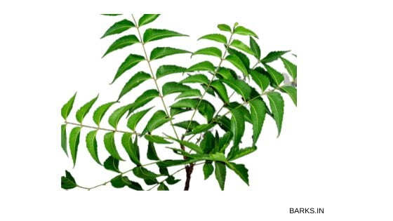 Neem leaves for dog tick home remedy