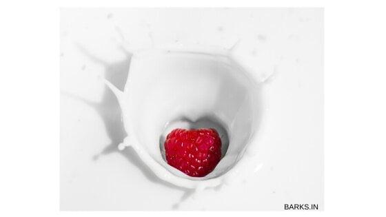 Yogurt for food allergy home remedy