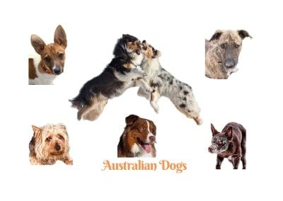Australian Dog breeds. A comprehensive list of Australian dogs