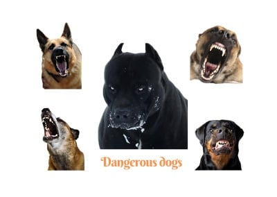 Most dangerous dogs in the world. 30 dog breeds ranked