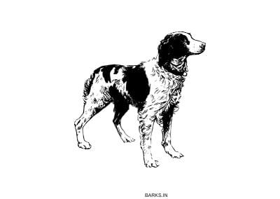 Aidi Dog