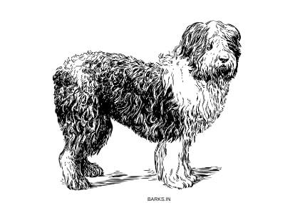 Armant Dog