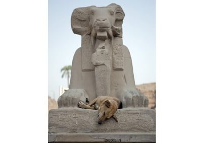 Dog sleeping in Egypt