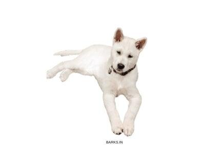 Jeju Dog Alert