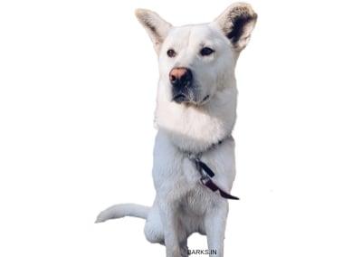 Pungsan dog Sitting
