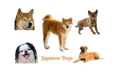 Japanese Dog Breeds. The fantastic dogs of Japan