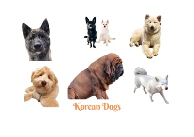 Korean Dog Breeds. A list of all Korean dogs