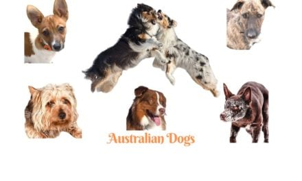 Australian Dog breeds. A comprehensive list of Australian dogs