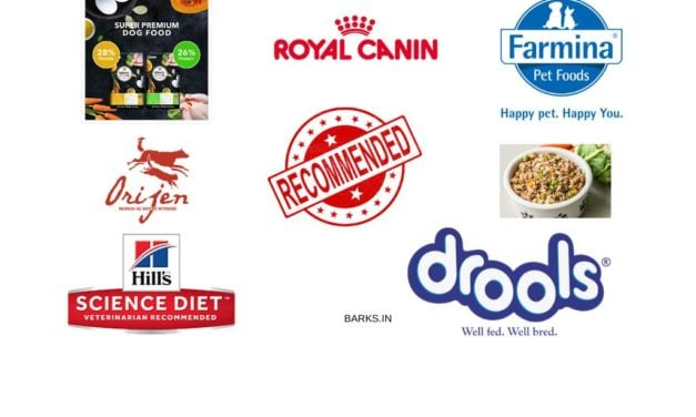 Review Of 10 Best Dog Food in India [2020 updated]