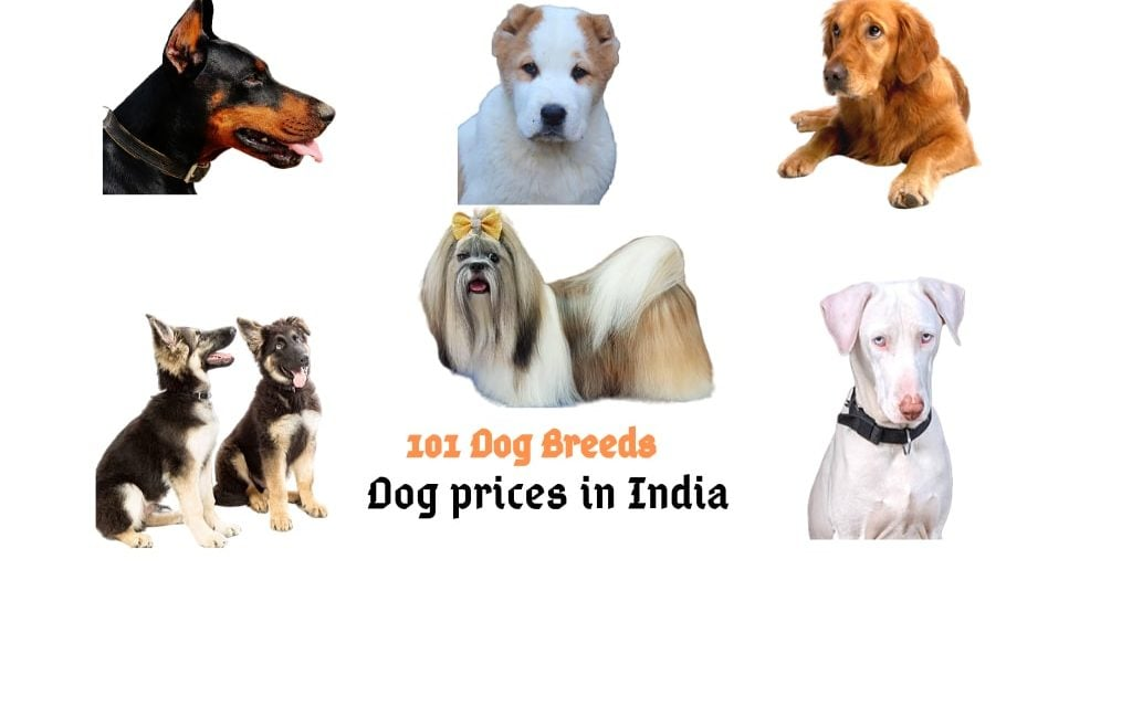Dog prices in India 2020 (100 dog breeds)