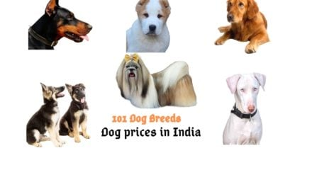 Dog prices in India 2021 (100 dog breeds)