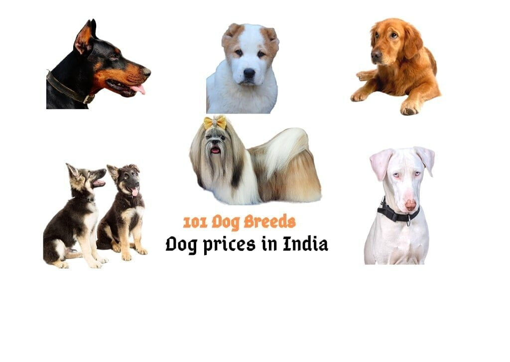 Barks In Dog Prices In India 2020 100 Dog Breeds