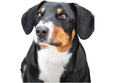 Entlebucher Mountain Profile