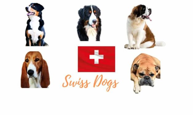 Swiss dog breeds. All native dogs of Switzerland
