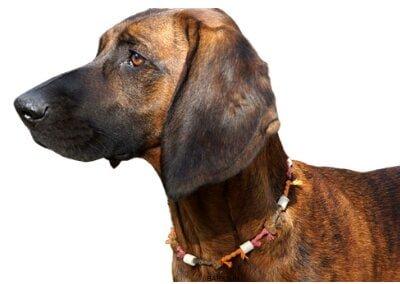 Bloodhound alert