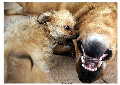 Dog theory of mind