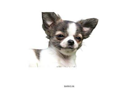 Dumb puppy dog