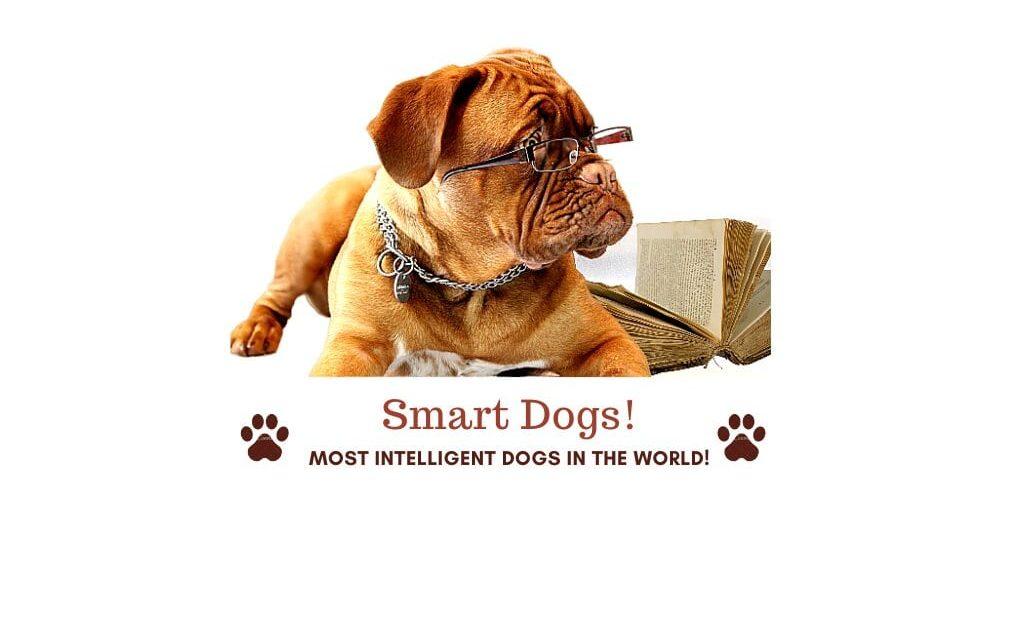 Smartest dog breeds. 100 Most intelligent dogs