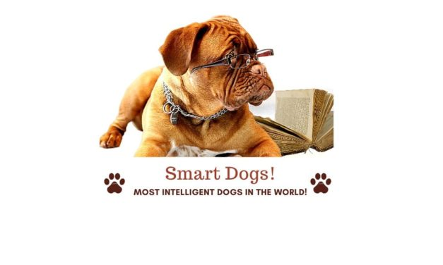 100+ Smartest dog breeds. Most intelligent dogs