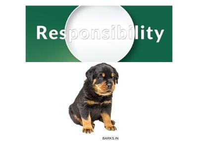 Rottweiler Breeders Responsibility Illustration