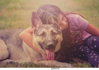 Caring for a GSD