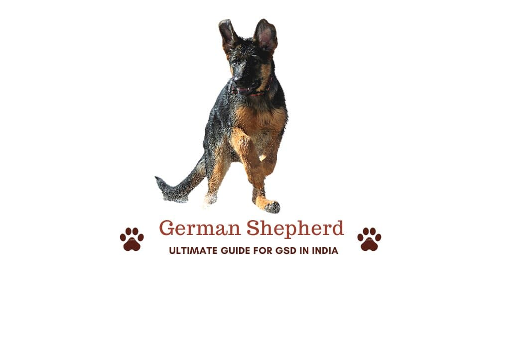 Barks In German Sheperd Dog In India All You Need To Know Guide