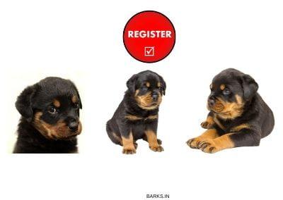 Rottweiler KCI Registration illustration