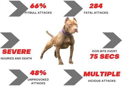 Pitbull Attack Stats