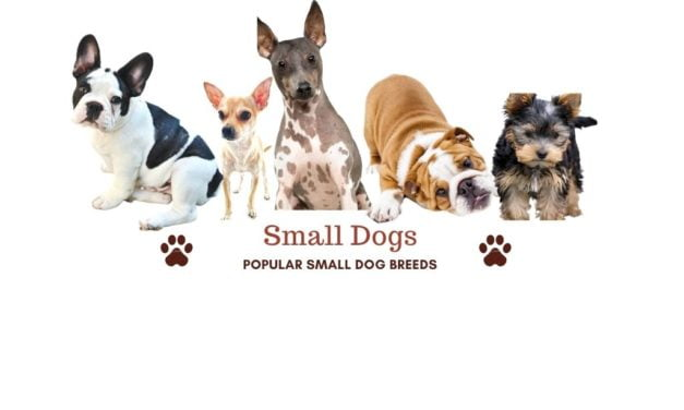 Small dog breeds. 95 amazing small dogs for your family