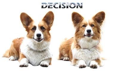 Small dog choice