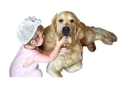 Caring for Golden Retriever