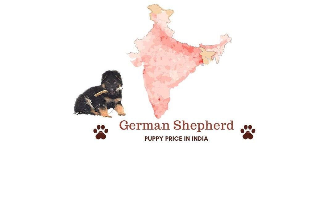 German Shepherd Price in India [In major Indian cities]