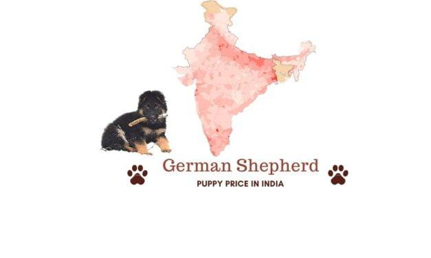 German Shepherd Price in India [In major Indian cities]