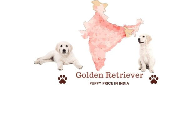 Golden Retriever puppy price in India across all major cities