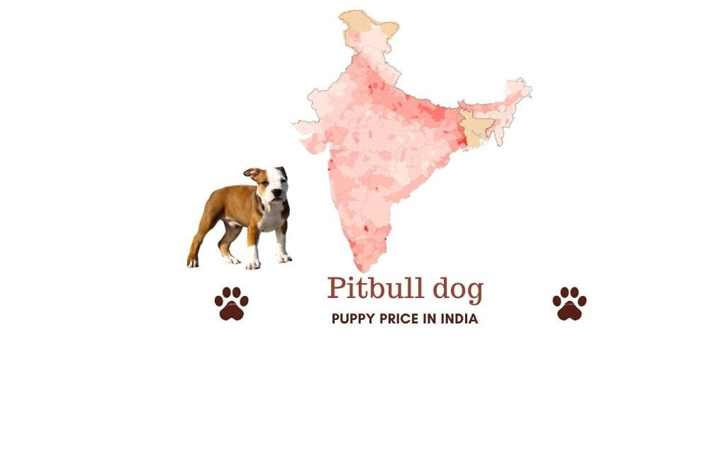 Pitbull price in India [all major Indian cities]