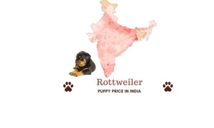What is the price of Rottweiler in India? Price in all major cities