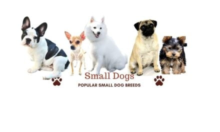 15 Small dog breeds in India. Best small dogs for apartments