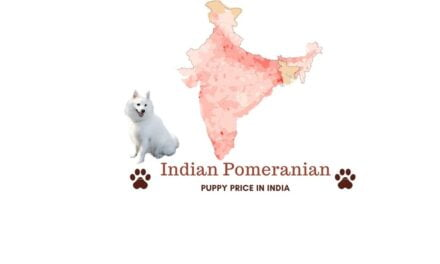 Pomeranian price in India. Dog food cost, Vet cost & more
