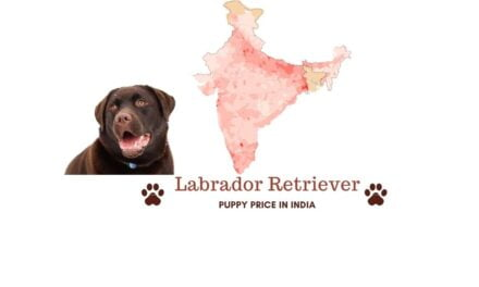 Labrador dog price in India. [all major cities]