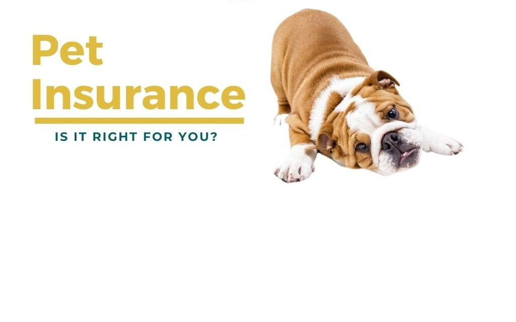 What is pet insurance? Do I need one for my pet in India?